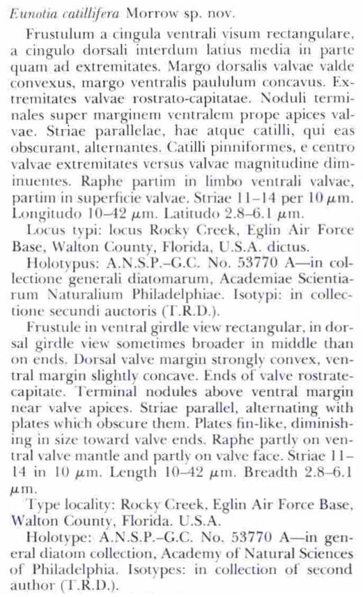 Eucatillifera Original Description
