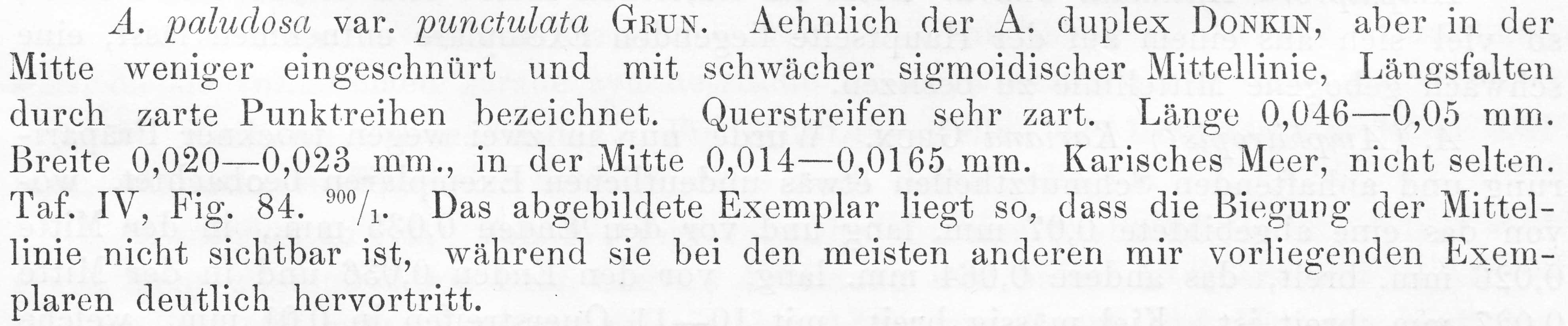 Entomoneis Punctulata  Orig Descr