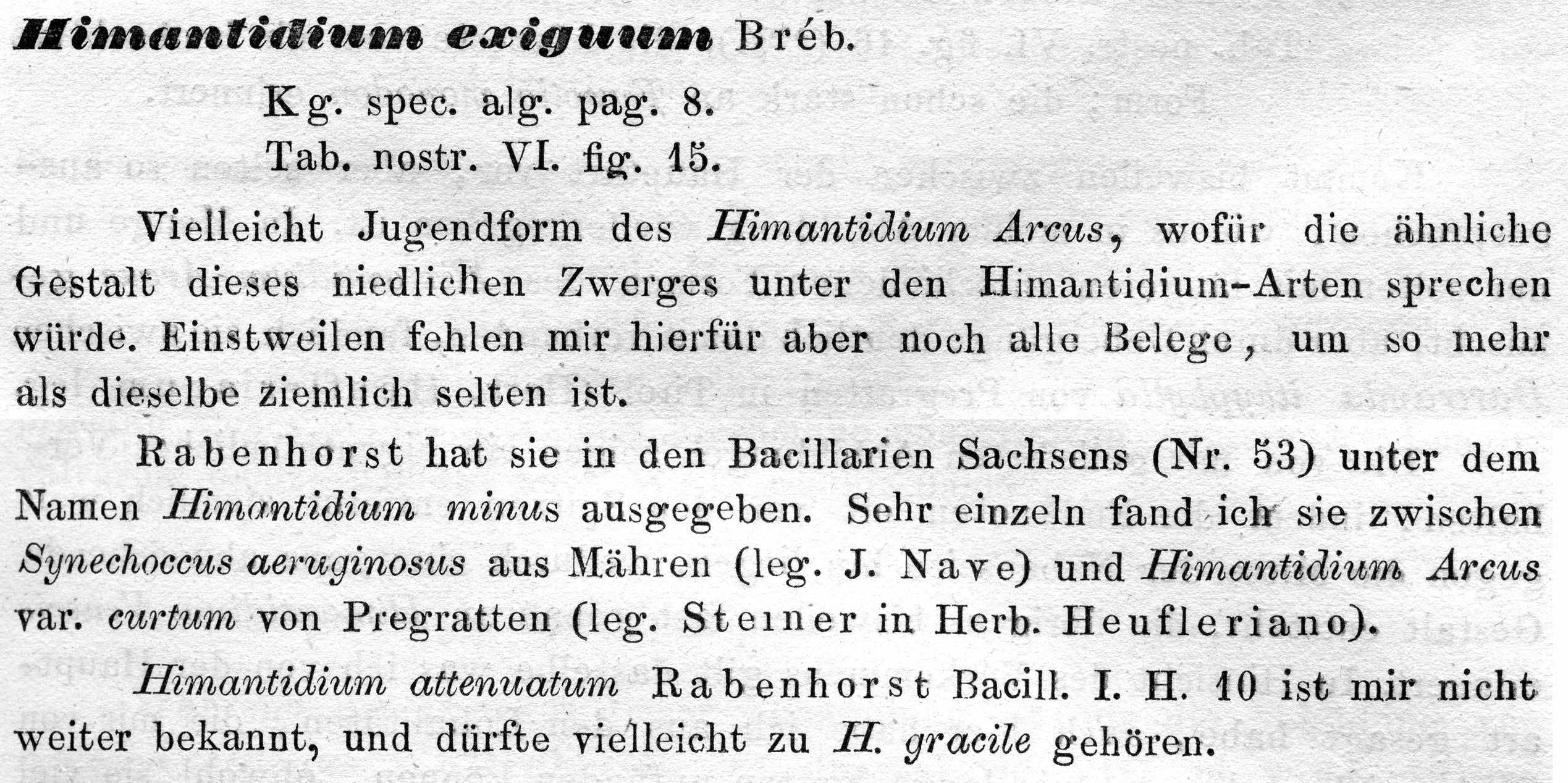 Eunotia Exigua  Grunow1862  Descr