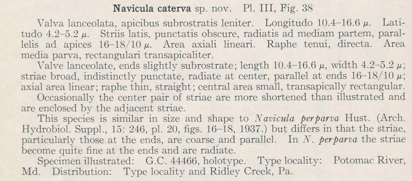 H And  H  Navicula Caterva Description