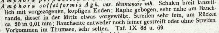 Mayer 1919 Text