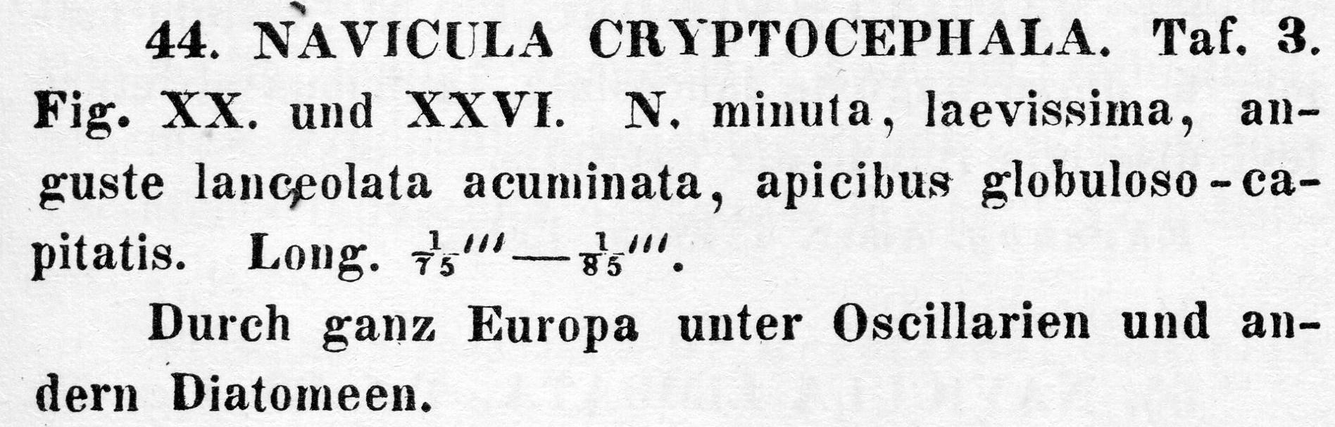 Na Cryptoceph Or Descr
