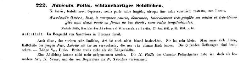 Navicula Follis Ehrenberg 1838 Text 1