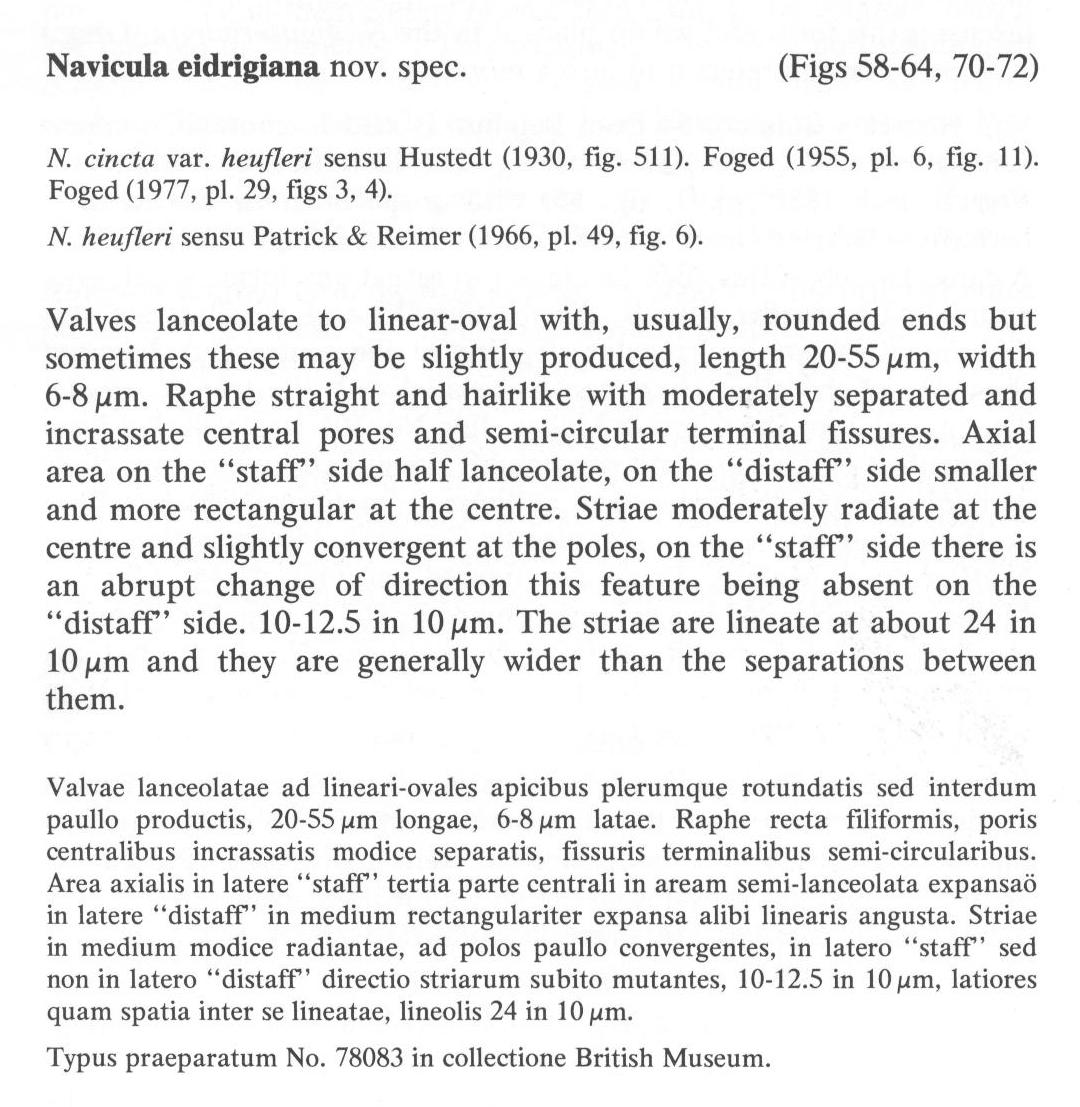 Navicula Eidrigiana Origdesc