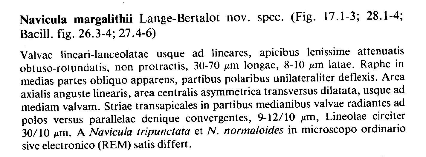 Navicula Margalithii Origdesc002