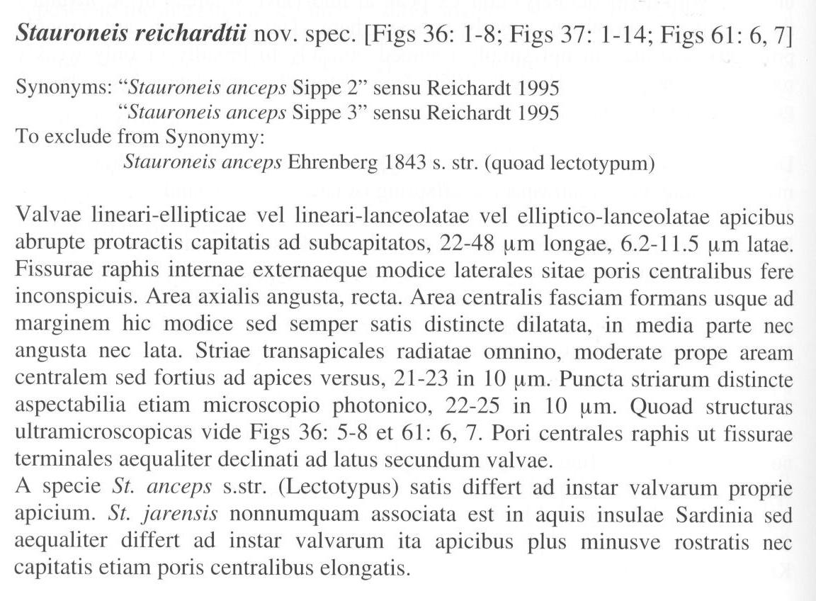 Sreichardtii Origdesc