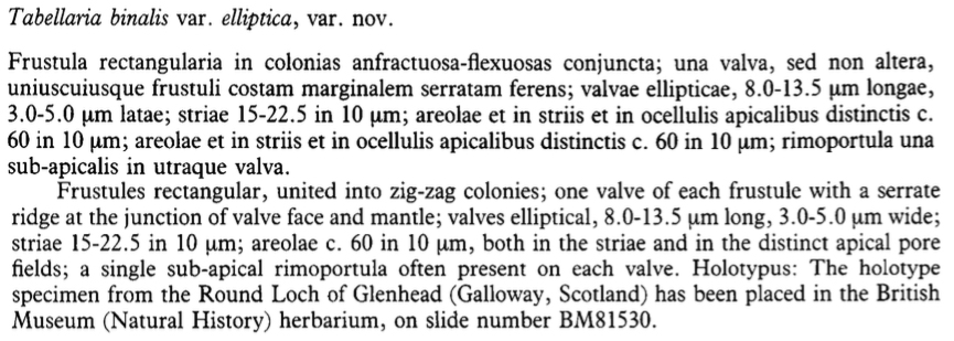 Tabinaris Velliptica Original Text