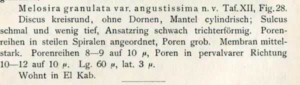 Melosira granulata var. angustissima orig illus