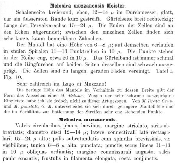 Melosira muzzanensis orig illus