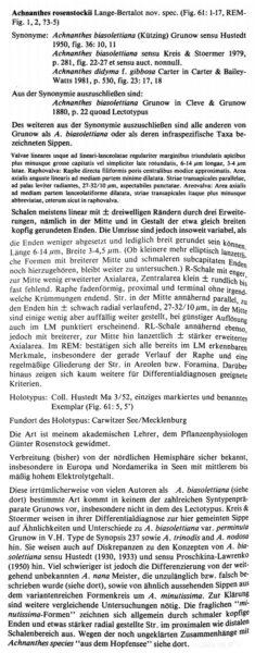 Achnanthes Rosenstockii orig descr1