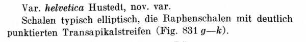 Achnanthes austriaca var. helvetica orig descr