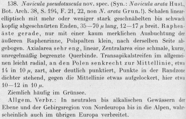 Aneumastus pseudotuscula orig descr