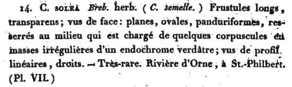Cymatopleura solea orig descr1