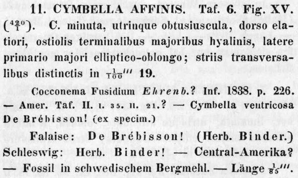 Cymbella affinis orig descr