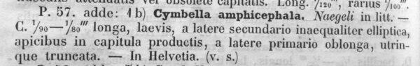 Cymbella amphicephala orig descr