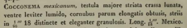 Cymbella mexicana orig descr
