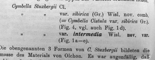 Cymbella stuxbergi var. intermedia orig illus