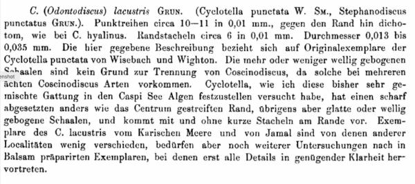 Coscinodiscus lacustris orig desc
