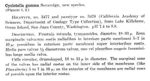 Cyclotella gamma orig descr1