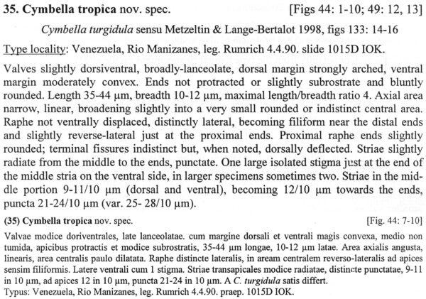Cymbella Tropica  Descr