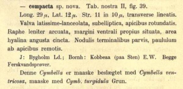 Cymbella compacta orig descr
