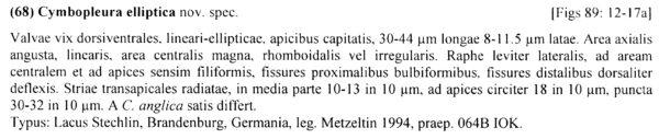 Cymbopleura elliptica orig descr