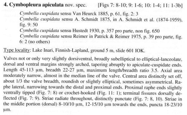 Cymbopleura apiculata orig descr