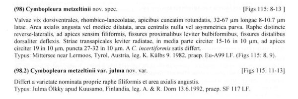 Cymbopleura metzeltinii orig descr