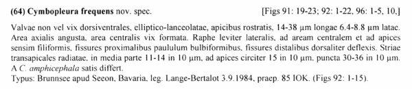 Cymbopleura frequens orig descr