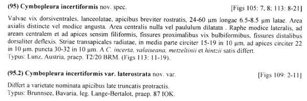 Cymbopleura incertiformis var. laterostrata orig descr