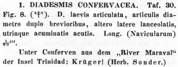 Diadesmis Confervacea  Descr