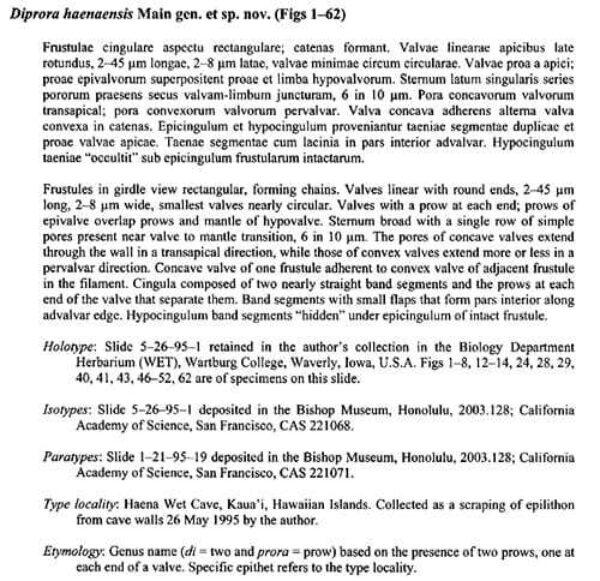 Diprora Haenaensis Orig Descr