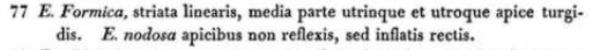 E  Formica  Ehrenberg 1843