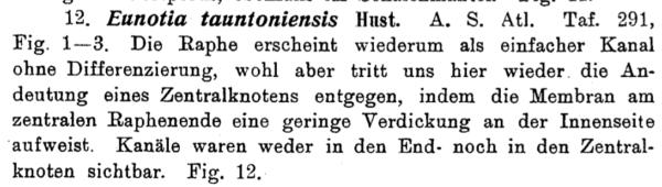 Eutaunt  Hustedt 1926 Text
