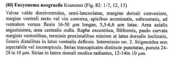 Encyonema Neogracile Origdesc