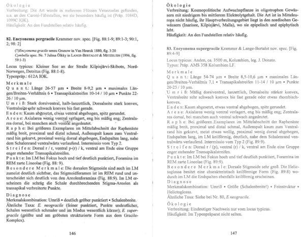 Encyonema Pergracile Orig Des