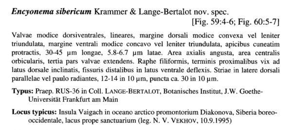 Encyonema Sibericum Origdesc001