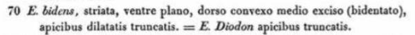 Eunotia Bidens  Ehrenberg 1843