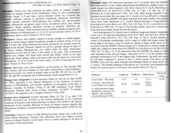 Eunotia Kociolekii  Textscan I