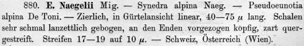 Eunotia Naegelii  Orig Descr