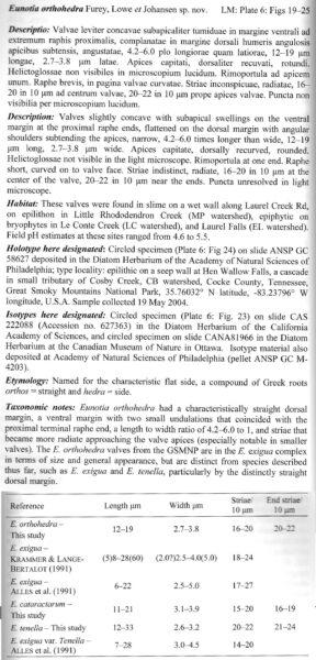 Eunotia Orthohedra  Textscan