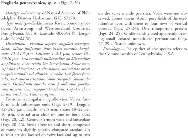 Fragilaria Pennsylvanica  Morales Originaldescription