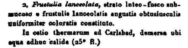 Frustulia Lanceolata  Agardh1827002