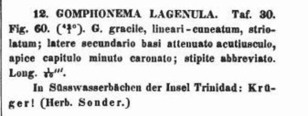 Gomphonema Lagenula Orig Desc