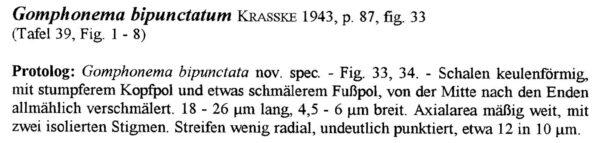 Gomphonema Duplipunctatum Origdesc001