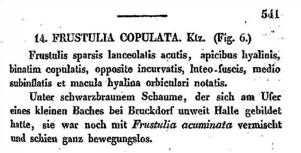 Kutzing 1833 Description