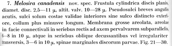 Melosira Canadensis Descr