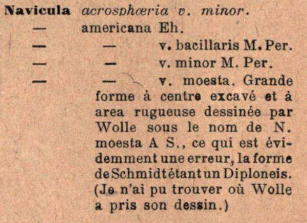 Naamericana Moesta  Originaltext