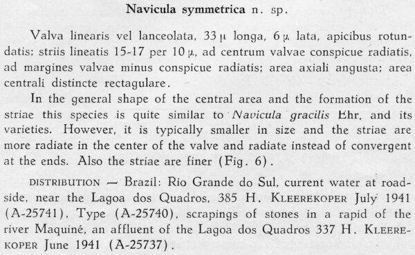 Nasymmetrica  Orig Descr