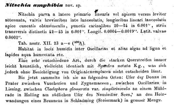 N Amphibia Orig Description Text